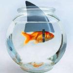 Imposter Fish